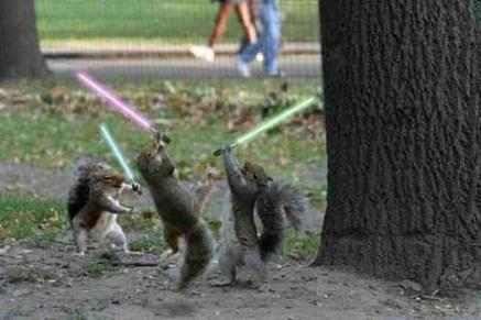 Lightsaber Squirrels